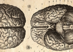 http://radiolab.fr/wp-content/uploads/2016/12/Old-Anatomy-Drawings-Head-Dissection-wpcf_250x180.jpg